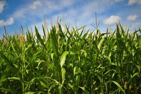 politica agricola comune europa