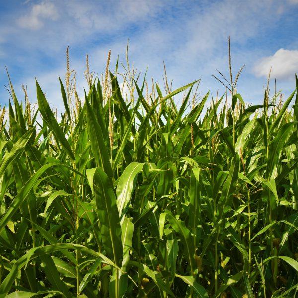 Slow Food sulla Pac: «Bene le strategie che puntano all'agroecologia, adesso piani nazionali all'altezza del Green Deal»
