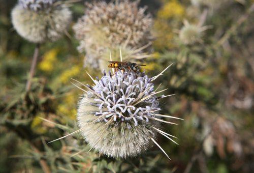 Diamo alle api e agli impollinatori una possibilità di sopravvivere: proteggiamo la foresta!