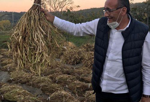 «Il cibo non è più d'oro». Il costo la crisi sanitaria al cibo made in Italy