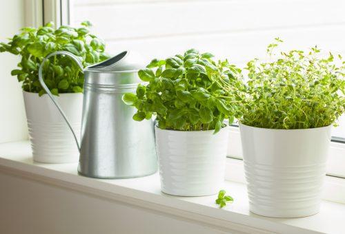 Erbe aromatiche e ortaggi di fine stagione: ecco qualche consiglio