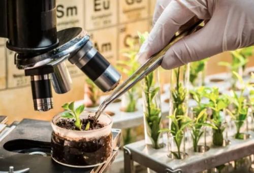 Nbt, ecco perché le nuove tecnologie genetiche non convincono Slow Food