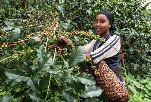Il caffè è un prodotto agricolo. Ci avete mai pensato?