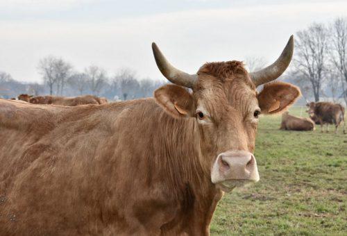 Benessere animale: Emilia Romagna avvia il percorso verso allevamenti privi di gabbie