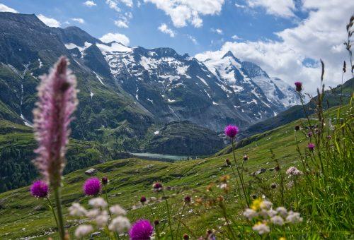 Insetti impollinatori e biodiversità: un binomio fondamentale per noi e il pianeta