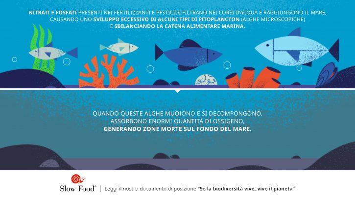 Plancton biodiversità marina