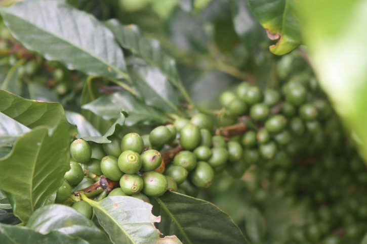 Presidi Slow Food Caffè