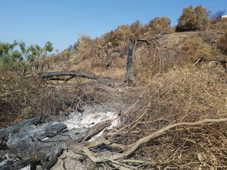 incendi Sardegna rete slow food