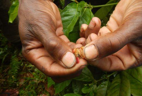 Slow Food al Y20 per la giornata del caffè