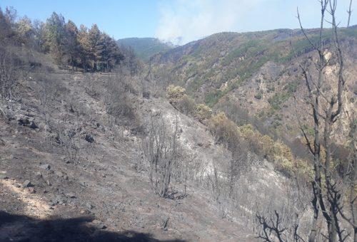 Incendi in Calabria: «Il fuoco distrugge la biodiversità e spegne la speranza»