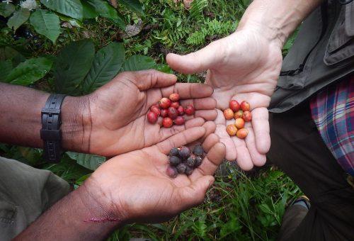 Presìdi Slow Food del Caffè: prime comunità della Slow Food Coffee Coalition (seconda parte)