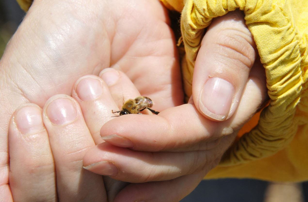 Presidio Slow Food miele