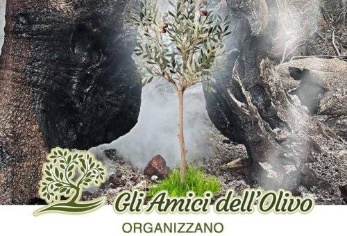 Un olivo per il Montiferru