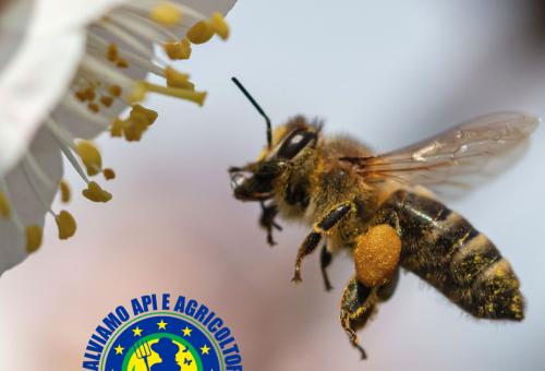 Un tour in 8 tappe per salvare api e agricoltori