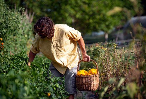 Biodiversità e lotta ai pesticidi: buone notizie dal fronte europeo